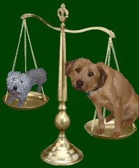 Dogs_small_web_view